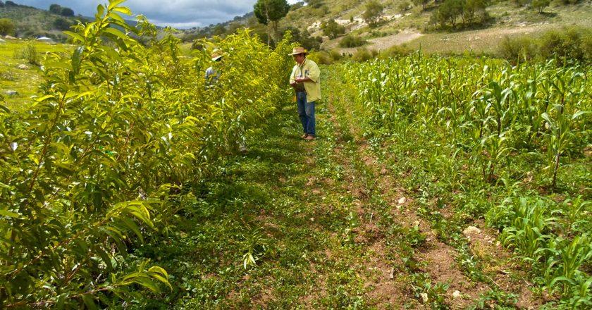 La agroecología es el presente para el campo