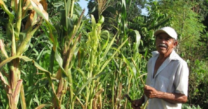 Agricultura de temporal sostenible, ambientalmente sana y viable